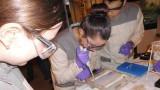 Biologie-Projekttage bei der Bayerpharma AG